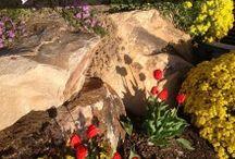 Garden / Plants / Chickens / by Loma Swick