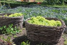 vegetable garden / by Emma Nguyen