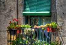Green Thumbs and Gardens! / Beautiful gardens, flowers and gardening ideas! / by Nancy Cowan