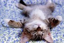 Cute Overload!! / by Cheryl Lynn