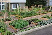Gardening  / by Megan O'Neill