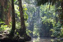 A Walk in the Rain Forest / by Sam Pryor