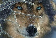 Animals in the Wild / by Valerie Manseau