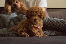 Puppy Love / by Jesse Bronstein