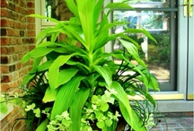 Made for the Shade Container Gardens / by Red Lotus Gardening Co.