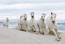 horses / by Teddy