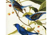 Flights of Fancy / Enjoy our assortment of products and images inspired by birds in the Arts. / by The Met Store