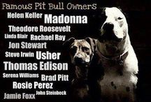 Pets / by Robin Bruhn