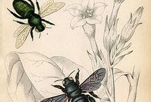 Beeeees / by Savannah Bee Company