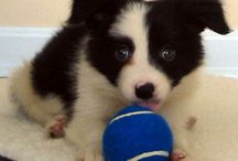 Puppies & their adorable friends / by Jackleen Rebottini