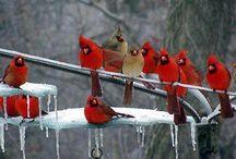 birds / by Cherie Guzman