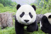 Panda's / by Debbie Beals