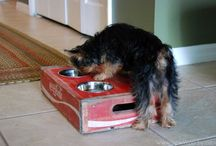 Doggies / by Misty Matthews