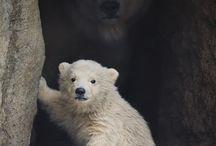 animals / by Benita Crook