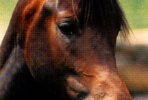 horses / by Michele Shea