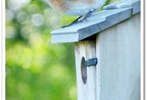 Bird Identification / by Lorrie Scott