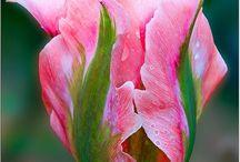 Pretty: Flowers / by Julie Miller