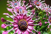 Garden Favs / by Zoe Cabuk