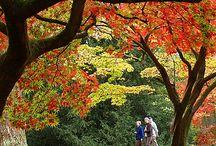 Autumn / by Deb Korbel