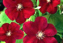 Flowers / by Joan Ziegler