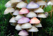 Mushrooms/Fungi/Mold/Lichen / by Deni Rosenberry