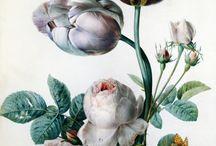 Flowers / by François Bégnez
