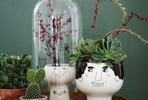 Succulents, Cacti & Other Plants / Succulents, cacti, air plants, terrariums. / by StyleCarrot • Marni Katz