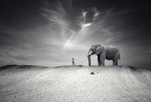 Photography / by Barbara Prainito