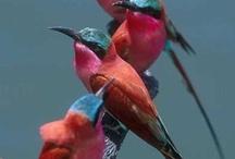 Birds / by Lynn Lerch