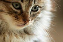 Meow. / by Christina Nystrom-Kolby