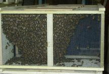 Beekeeping / by Rick Acton
