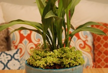 MCD Container Gardens / by MODCottage Designs