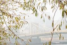 Bridges / by Joey Kennedy
