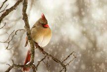 Birds / by Linda Bayarena