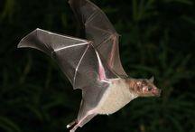 bats / by Dana Phillips