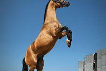 HORSES / by Martin Amador