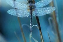 Dragonflies / by Wanda McBride-Owens