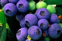 Fruit of many colors / by Sharon Johnson