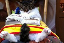 Livros & Filmes / Livros lidos, que vou ler ou que gostava de um dia vir a ler. O Filmes, idem! / by Fernando Bernardo