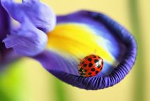 A Bugs Life / by Avril Dudley