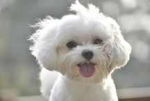 Puppy Love / pictures of cutest pups / by Carol Broughton