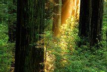Trees / by Linda Meleyal