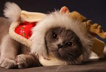 Poor Kitty / by Tamar Arslanian