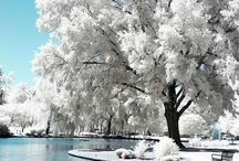 winter / by Joann Corsin Liszewski