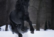Horses  / by Sharon Lawrence Smith