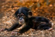 Primates / by Colleen Sullivan Blake