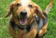 Passion || Animal Advocacy * Adopt, Don't Shop / by Jennifer McBrayer