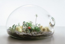 terrariums / by Stephanie Brubaker / stephmodo