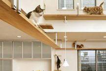 Cool Cat Cribs / by Tamar Arslanian