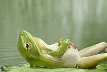 frogs / by Melody Arnold